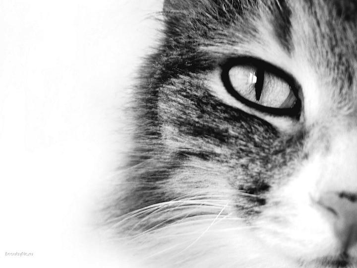 Katzen als Haustier | © panthermedia.net /Irina Fomenko